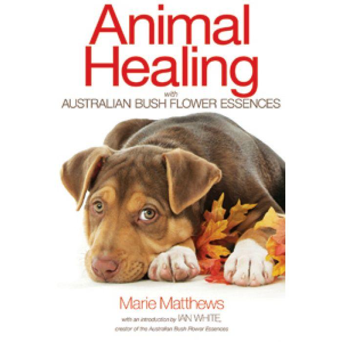 Animal Healing - Aust Bush Flower Essence