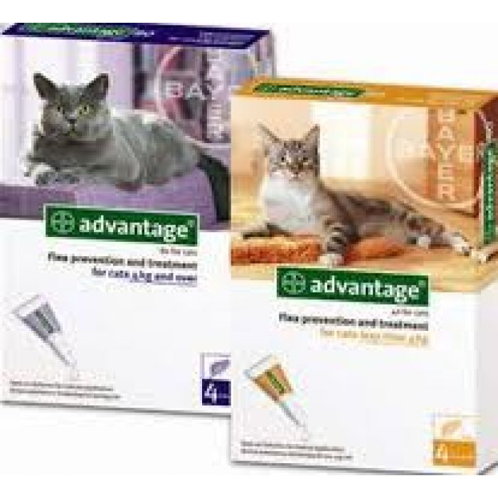Advantage for Cats is a once a month topical flea treatment for cats and kittens.