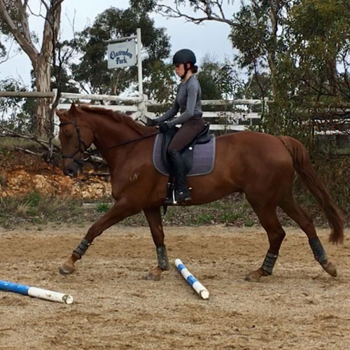 Equestrian Training - Pole and Cavelletti Exercises